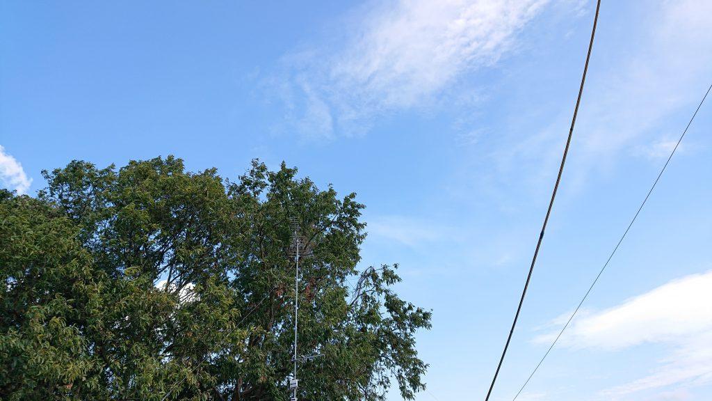 秋空と大きなクヌギの木